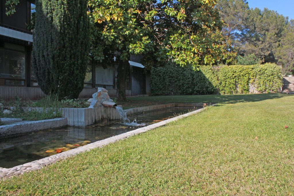 Autre séjour de prédilection des grenouilles : le bassin devant le bâtiment administratif Les Guilhem....